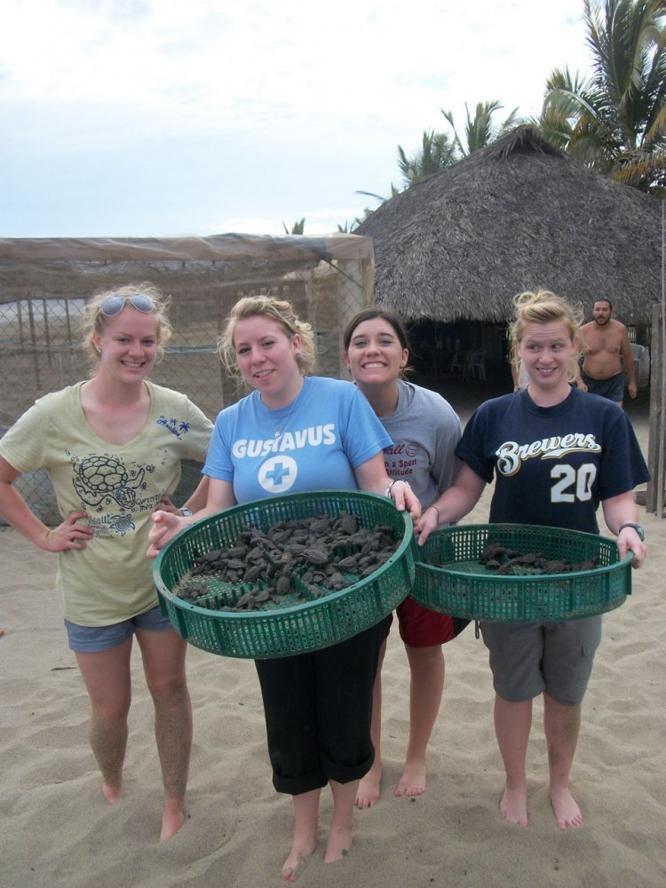 ES/Bio students release sea turtles.